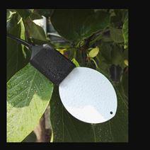 叶面温湿度传感器XD69-LWS-10库号M285210